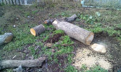 伐採した木