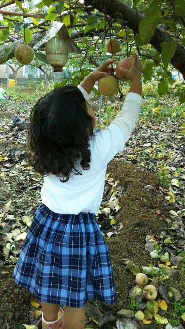 娘のリンゴ狩り