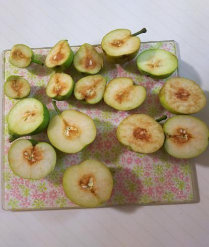 摘果した梨を切ってみたら
